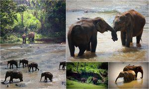 Pinnawala Elephant Orphanage 1/26 by Tripoto