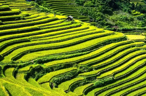 10 picturesque terrace farms that are perfect for your Instagram profile