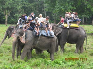 The Dark Truth of Elephant Rides in Asia