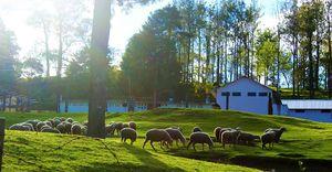 Ooty, coonoor,lovedale- few days in the Nilgiris