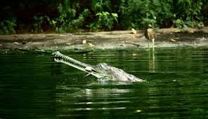 The Indira Gandhi Zoological Park 1/1 by Tripoto