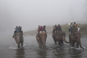 Yu he chal chal raahi...yu he chala chal!! Elephants on d way to jungle for safaari