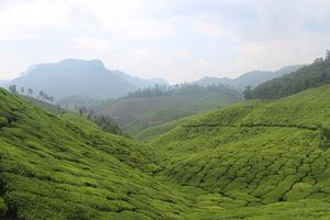 Kerala Diaries - Cochin,Munnar,Thekkady