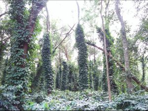 The Hidden Gems of Odisha