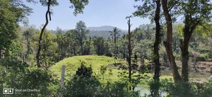 Why did I decide to spend my New year's at Kodagu!