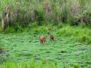 Emerald Green Beauty: Kaziranga