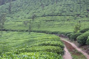 Old world charm - Kadumane Tea Estate