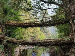 Living root bridges- Live and Let them Live #colourgreen