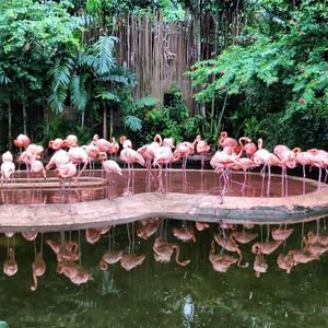 Reflecting on nature's marvels. #singapore #tripotocomunity