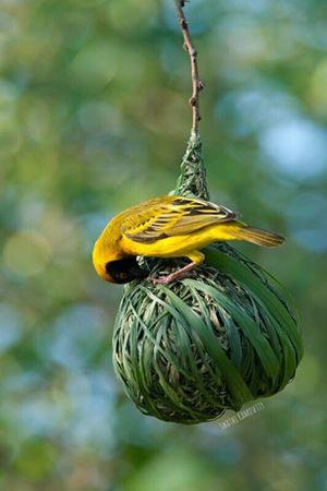 Birding at Kaikondrahalli
