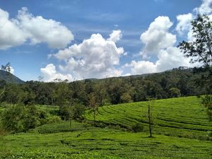 One day Trip to Vagamon