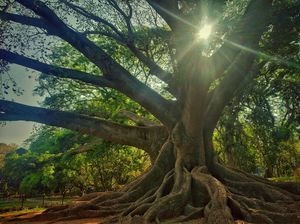 One day at Lalbagh Botanical Garden