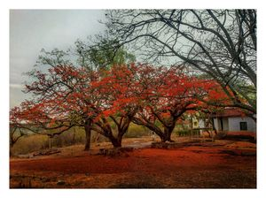 Experience Red in Horsley Hills -picture by Mi camera #AndhraPradesh #horsley
