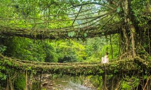 The Ultimate Guide To Cherrapunji: Discover Spectacular Waterfalls & Living Root Bridges