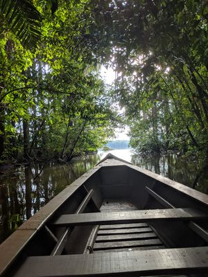 Into the wild wild wilderness of the Amazon Rainforests. It's dark, serene and green. #colourgreen