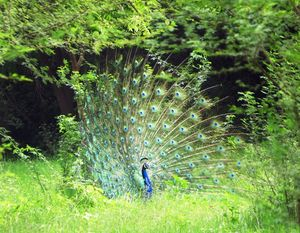 Shahpura: The Place of Birds in Rajasthan