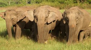 A Short Blog on Wildlife Places in Uttarakhand