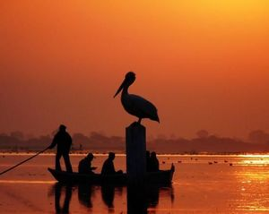 Nalsarovar Bird Sanctuary 1/undefined by Tripoto