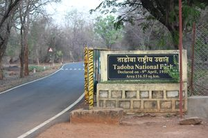 Tadoba: The jewel of Vidarbha
