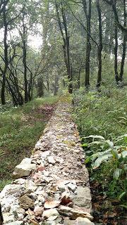 Nature's retreat - Kilbury Forest, Nainital