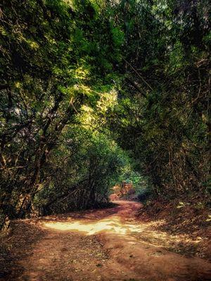 Hidden Roads of Nilgiris (Ooty)