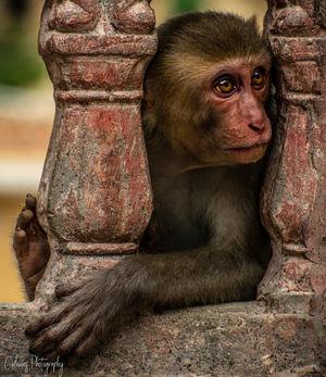 Monkey of Galta Gang???? #besttravelpictures