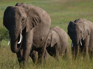 Maasai Mara National Reserve 1/2 by Tripoto