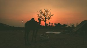 Rangeelo Rajasthan- Jaane Kya Dikh Jaye #notinhills #IssSummerBaharNikal