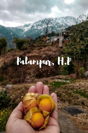 Palampur - A town where everything is picturesque #TravelPhotography #TripotoCommunity