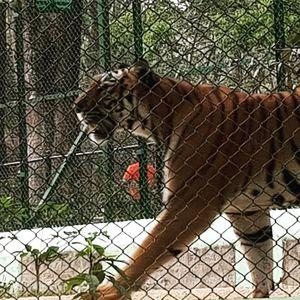Zoological park of Bangalore..