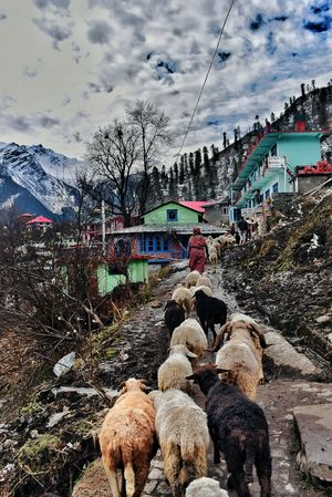 A Beautiful Village In Hippies Paradise :- Tosh Village