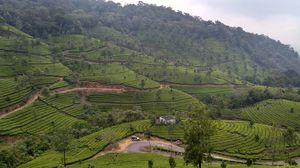 Munnar - Experiencing Kerala at the heart.