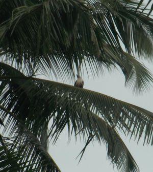 Paradise Lost: Kannur, Kerela