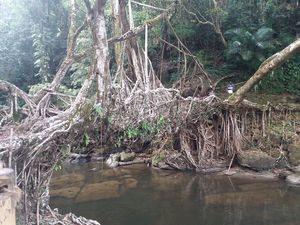 World Longest Living Root Bridge #MEGHALAYA