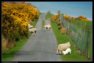 Islay 1/1 by Tripoto