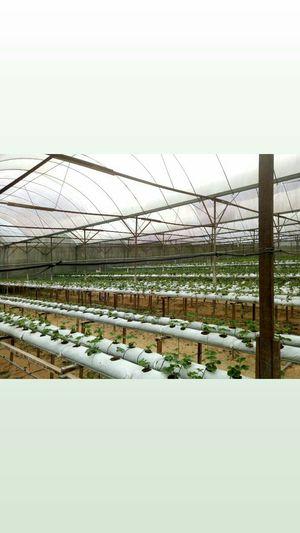 Cameron Lavender Garden 1/undefined by Tripoto