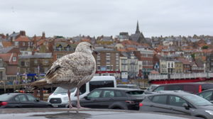 Whitby 1/undefined by Tripoto