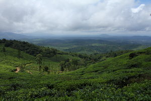 A DAY GUIDE TO WAYANAD