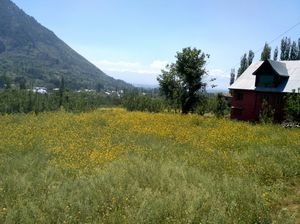 Kashmir - You will never miss an experience until you have experienced it