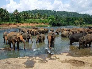श्रीलंका घूमने का प्लान है? यहाँ मिलेगी सारी जानकारी!