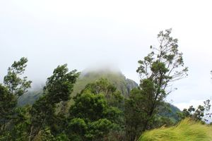 Munnar in Monsoon #photoblog