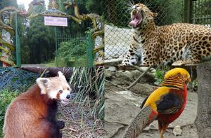 Himalayan Zoological Park 1/undefined by Tripoto