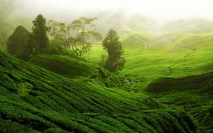 Wayanad - Land of the Paddy Fields
