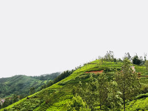 Trip To Nilgiris