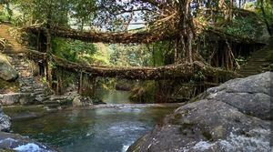 Alive and breathing... living Root Bridges Theme Landscape  #BestTravelPictures @tripotocommunity