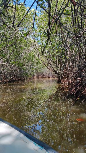 Mangrove Forest - Pichavaram
