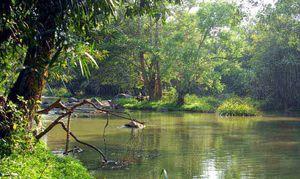 Kuruvadweep - A River Island
