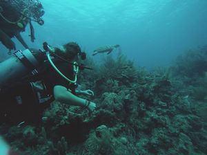 My Scuba Diving Escapade