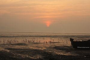 Sewri Flamingo Point 1/1 by Tripoto