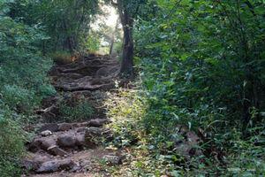 Karnala Bird Sanctuary 1/undefined by Tripoto